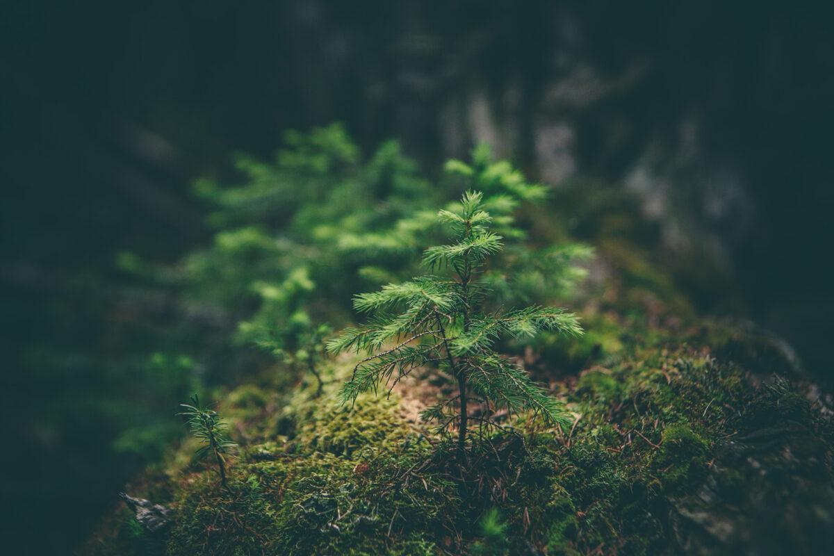Licenciamiento Ambiental y Consulta Previa